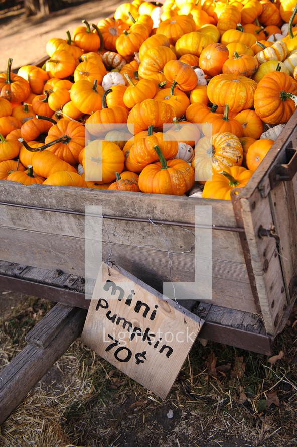 mini pumpkins in a wagon