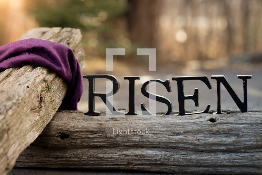 purple shroud on a wooden cross and the words Risen