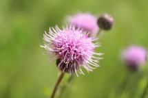 Flowers in green meadow