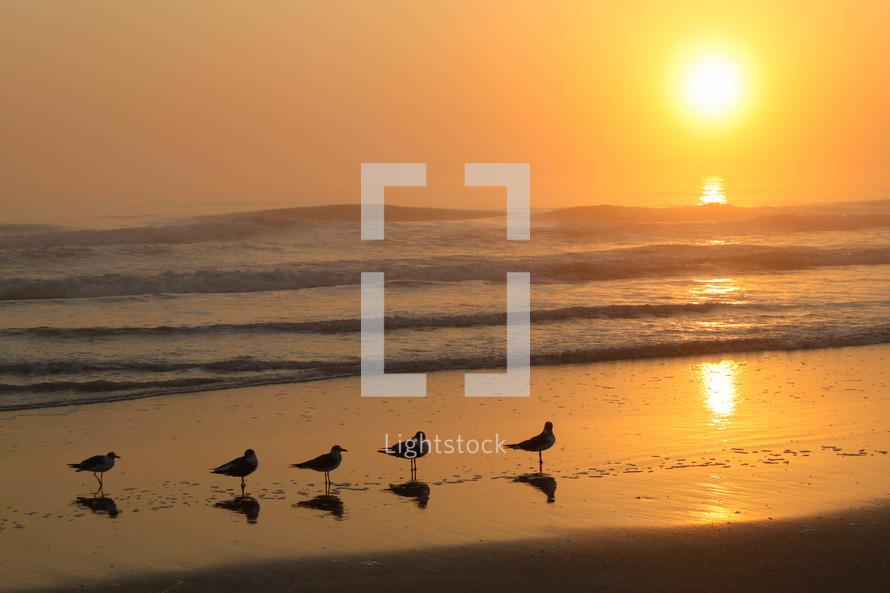 sea gulls standing on wet sand on a beach