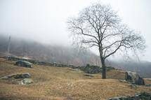 a bare tree on a mountainside