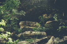Boulders among green trees in a forest.