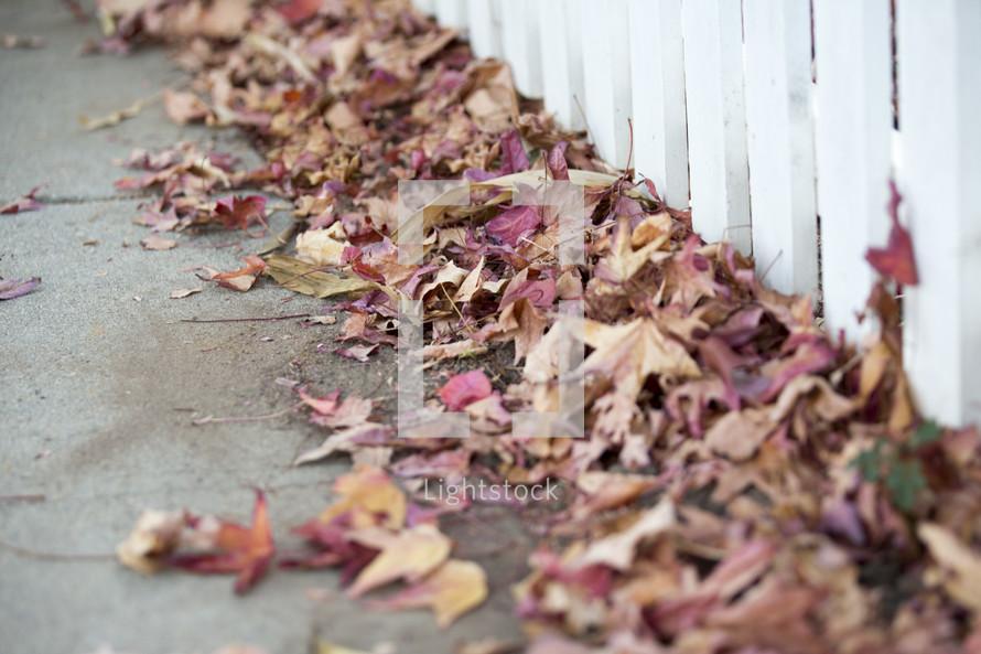 fall leaves lining a sidewalk