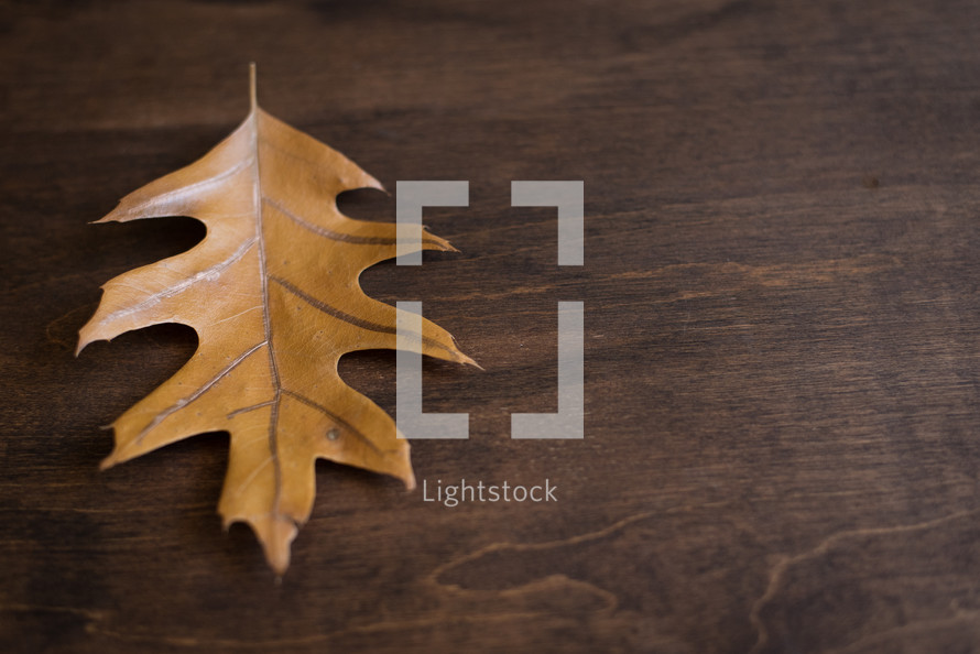 single brown leaf on wood background
