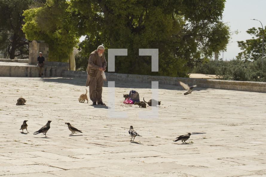 a man feeding stray cats