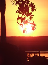 silhouette of a low hanging branch in front of the sun at sunset