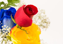 yellow, red, and blue rose