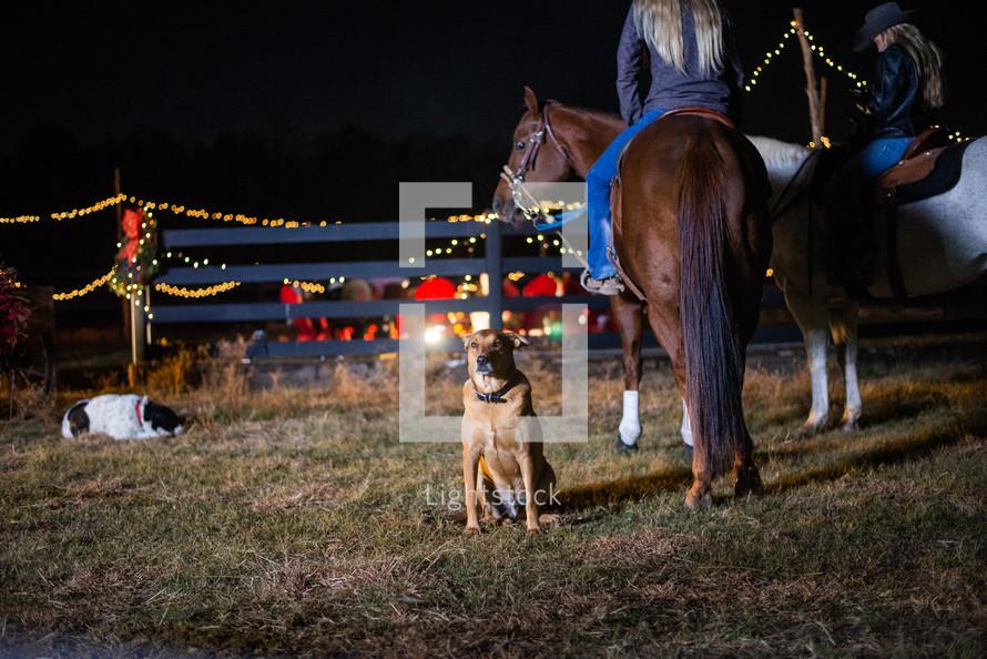 Christmas lights on a ranch