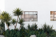 palm trees and window around a white building