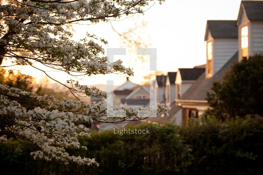 houses in a neighborhoods