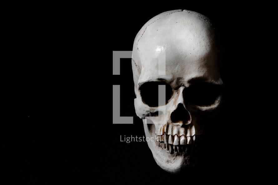 White skull on a black background