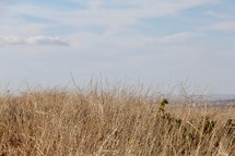 field of brown grasses