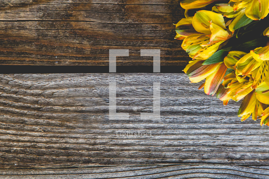 yellow flowers on wood
