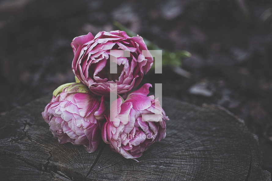 pink peonies on a tree stump