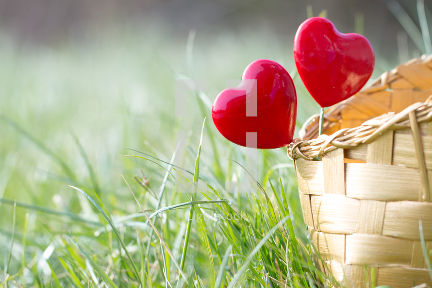 Red hearts on sticks in a basket in the grass