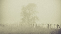 tree on a farm in the fog