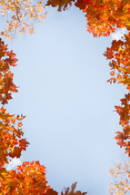 a border of fall leaves on trees with a blue sky.