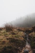 stream and dense fog
