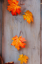 fall leaves on a wood background