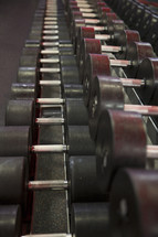 free weights at the gym