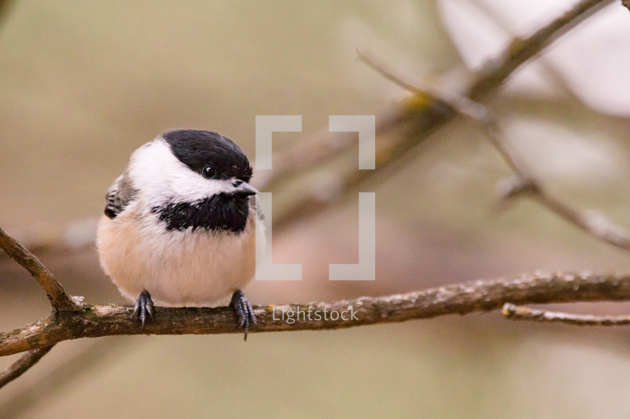 a song bird perched on a branch