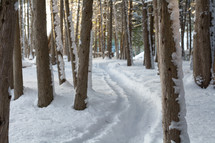 path through snow in a forest