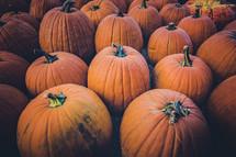 orange pumpkins in a pumpkin patch