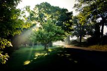 sunlight and green grass