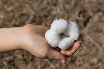 hand holding a cotton plant