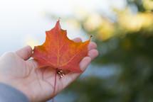a hand holding a fall leaf