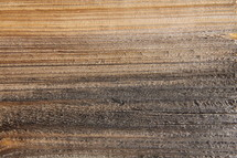 Wood grain of a tree