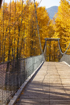 bridge and fall foliage