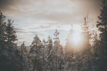 sunburst over a winter forest