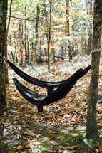 hammocks hanging between two trees in a forest