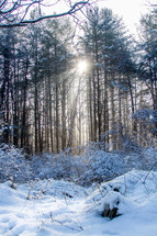 sunlight through trees in a winter forest