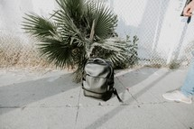 book bag in front of a palm