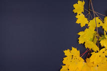 yellow fall leaves on navy blue background