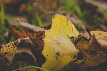 yellow fall leaves on the ground