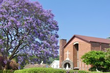 purple blooms on a tree and Catholic church