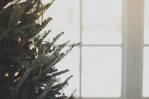 A Christmas tree by the window