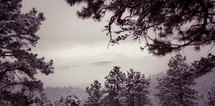 morning fog in a snowy winter mountain forest