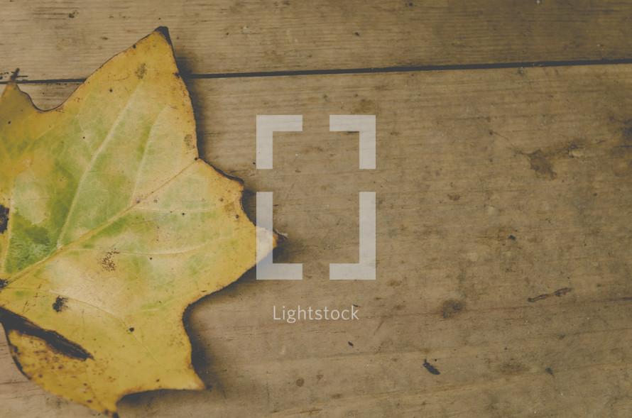 fall leaf on wood