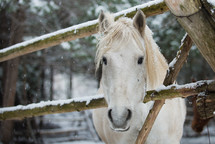 a horse in the snow