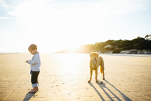 toddler boy and dog on a beach at sunset