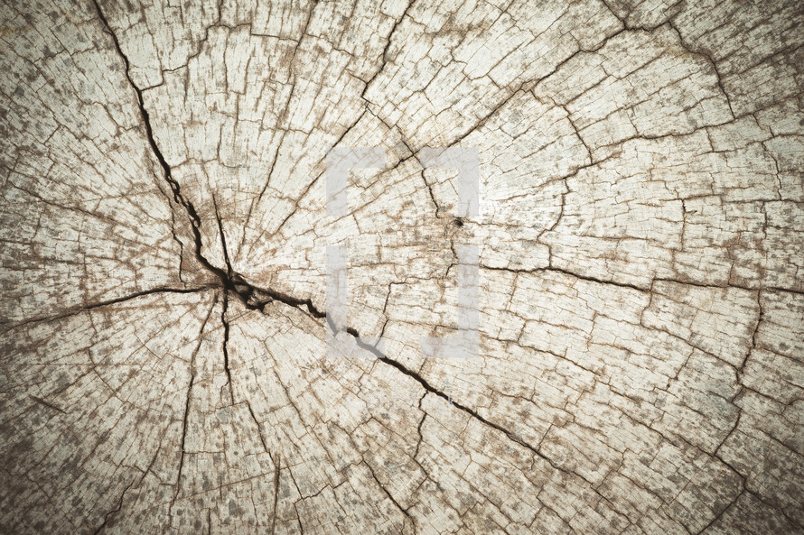 wood cut tree texture