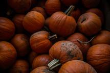 a pile of orange pumpkins