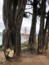 view of the San Francisco Golden Gate Bridge