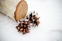 log and two pine cones on a white background