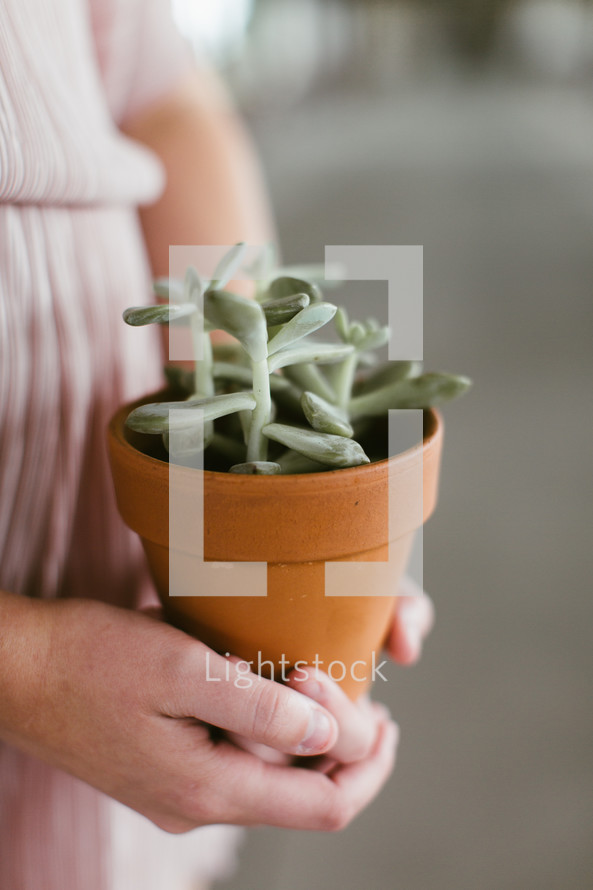 woman holding a potted succulent plant