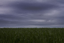 A field of grass under a stormy sky.
